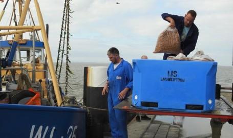 Garnalen-visserij-Lauwersoog-vissers-Jan-Koelstra